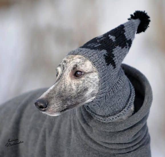 greyhound-grey-hat